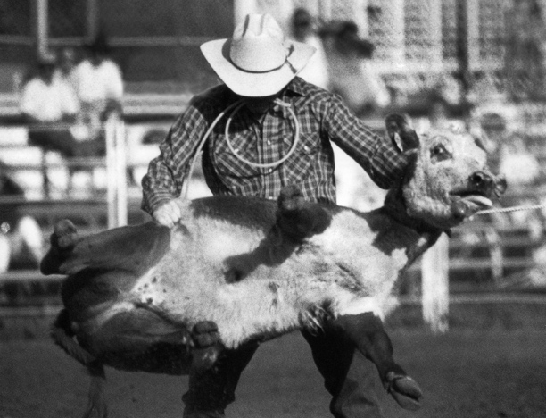 1981 - A cowboy wrestles a calf in the roping competition at a New Mexico rodeo.